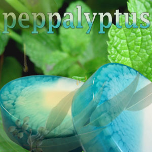Peppalyptus - handmade glycerin soap by Shmutzies